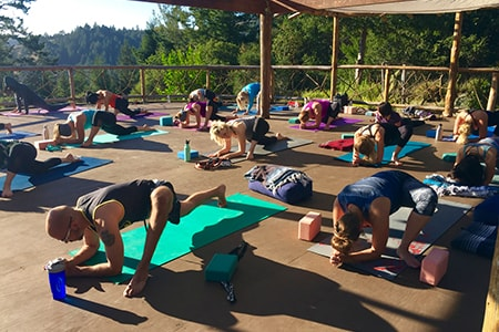 Lotus Feed outdoor yoga san francisco bay area