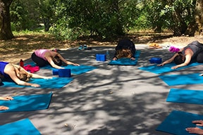 Yoga Retreats and Events in Sonoma